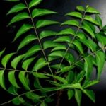 Benefits Of Neem Plant | Quick Home Remedy